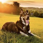 Dog Wallpapers HD-SocialPeta