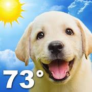 Weather Puppy-SocialPeta