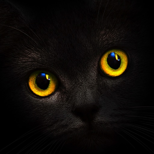Blackcatcard-SocialPeta